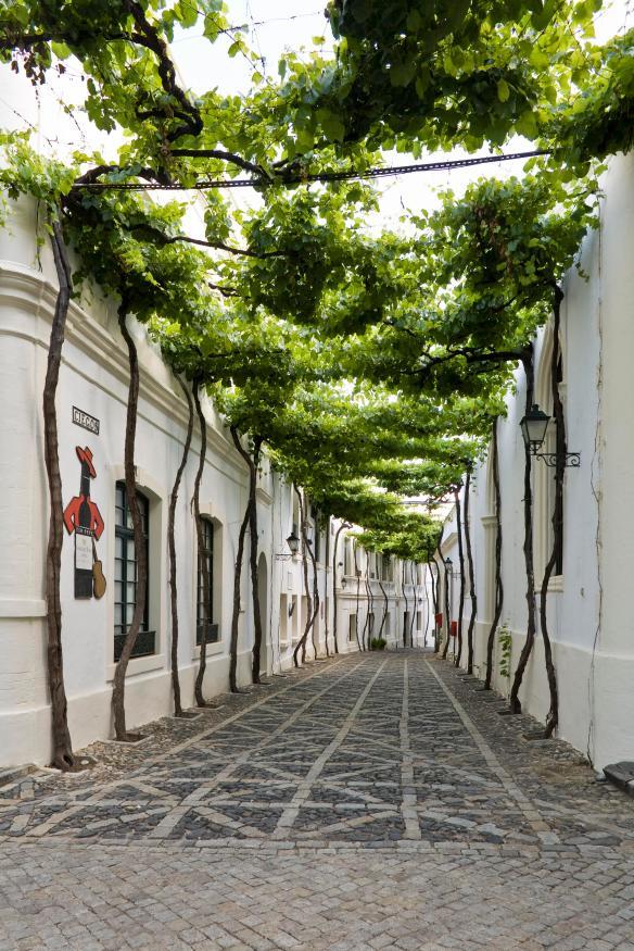 Bodega, Gonzalez Byass, Jerez, C‡diz, calles emparradas,